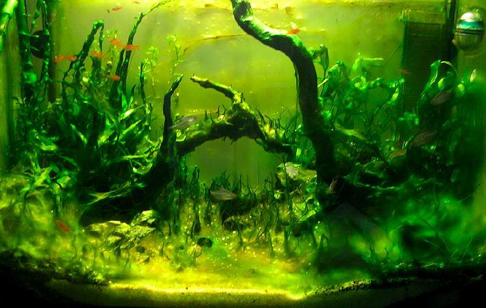 apparition des algues